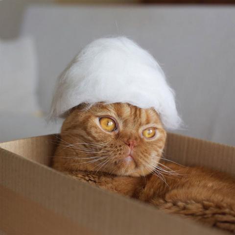Виртуозы кошачьей пряжи: пора прекратить выкидывать котошерсть!