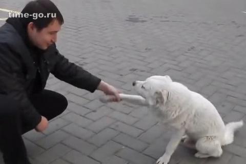 Эта бездомная собака продела…