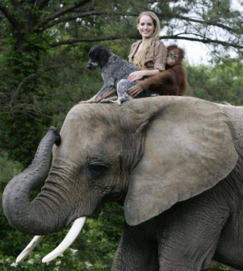 Веселые и милые животные для…