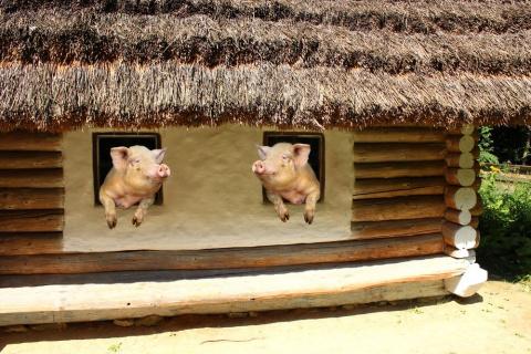 Свинья ломится в волчье логово