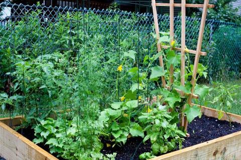 Мёд, зола и варенье. Какие натуральные удобрения используют в огороде