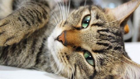 Жизненные советы от вашего… кота