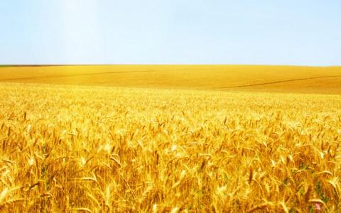 Американские фермеры мылят в…