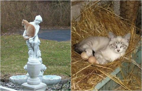 20 мест, где котов не ждали ))