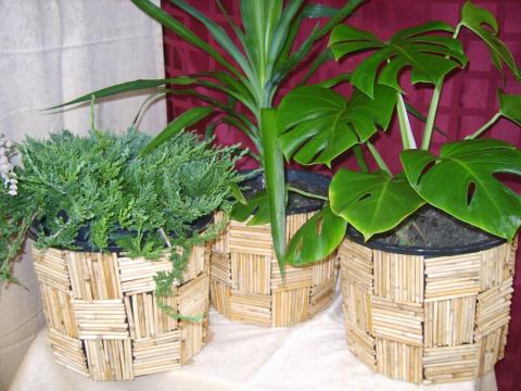 Толковый цветовод знает, для чего втыкать спички в горшки с растениями!