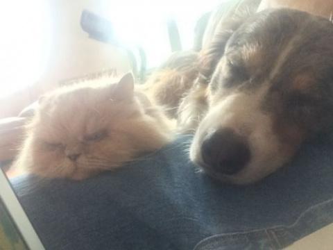 Кошки и собаки, дружбе котор…