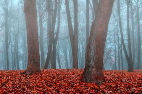 Осень: лучшие фотографии со …