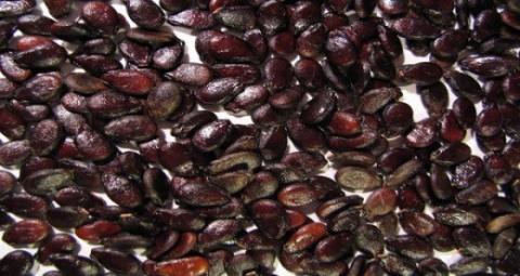 Вот что могут сделать семена…