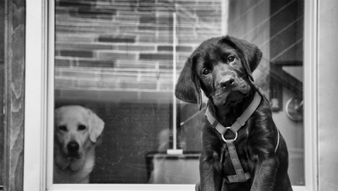 Как выбрать породу собаки.