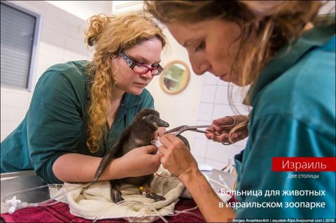 Больница для животных в зооп…