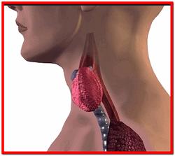 Гипотиреоз щитовидной железы лечение в домашних условиях