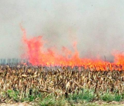 Венгрия уничтожает все поля …