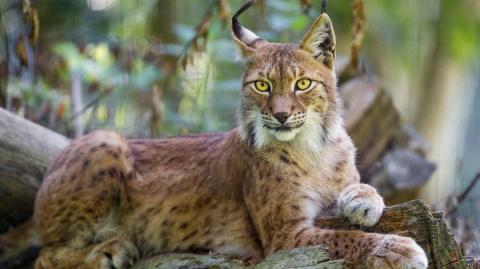 Красота животного Мира