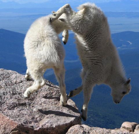 Скалолазы животного мира!
