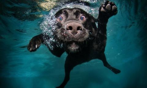 В России собак научили дышат…