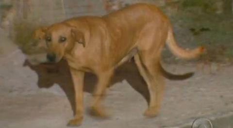 Собака, у которой душа больш…