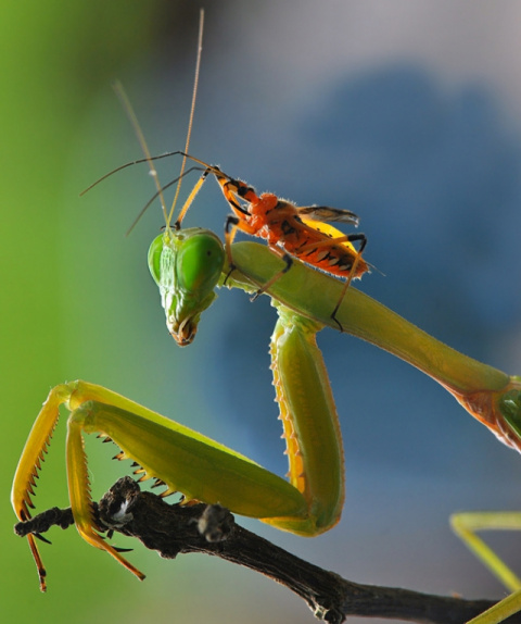 Взаимоотношения насекомых в …