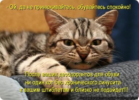 Котодром от Михалыча! - 10