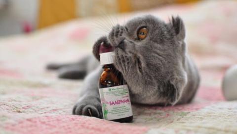Раскрываем тайну: почему кот…