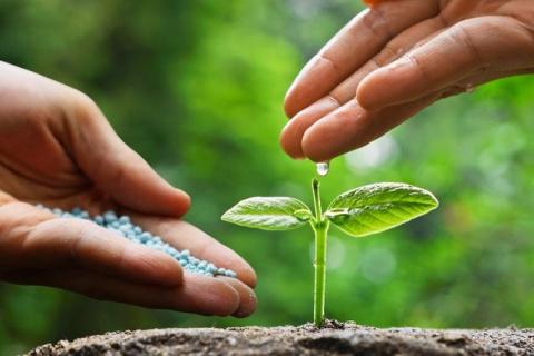 Когда и как применять микробиологические удобрения - советы специалиста