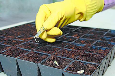 Выращиваем рассаду. Опытные огородники делятся секретами!