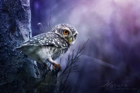 Сказочные птицы в фотографиях Sompob Sasismit