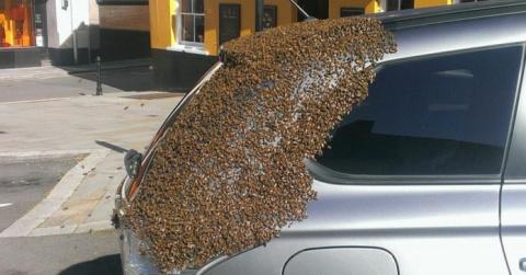 2 дня пчелиный рой атаковал …
