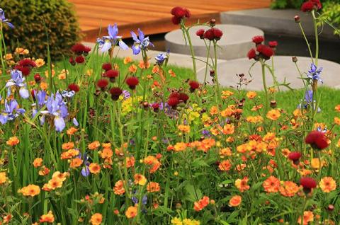 Модные сорняки. Сныть и лебеда могут украсить ваш сад