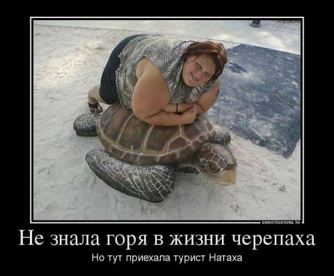 Не знала горя в жизни черепаха, но тут приехала туристка Натаха