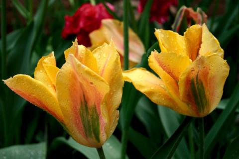 10 лучших сортов зеленоцветк…