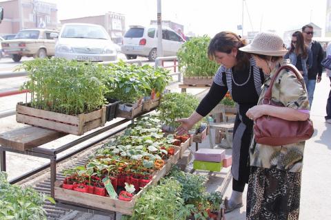 Как выбрать хорошую рассаду - советы специалиста