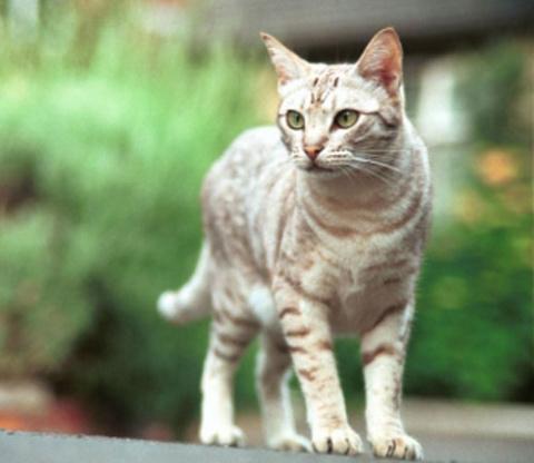 Какая кошка лучше??