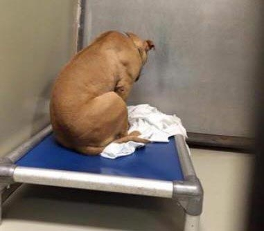Душераздирающее фото собаки,…