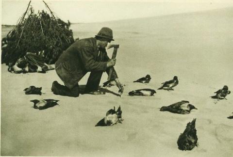 Кусатели ворон или как ловили птиц на Куршской косе