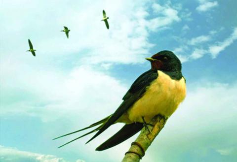 Приметы, связанные с птицами
