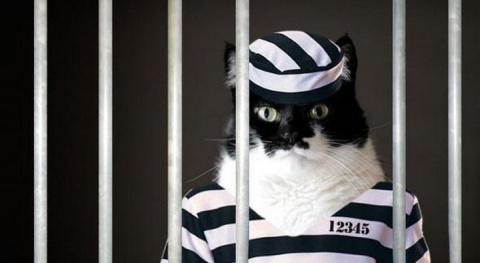Животные преступники: кот-контрабандист, голубь-шпион, корова-убийца и другие