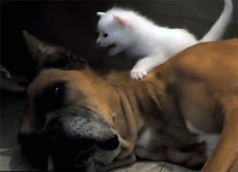 Собака спасает брошенную мать-кошку и ее котят!