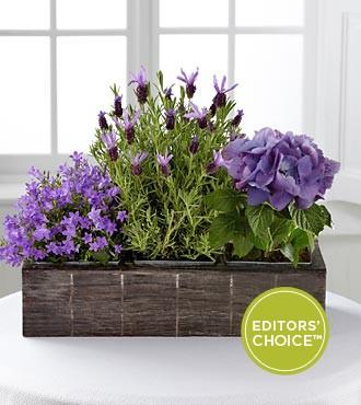 Ящики для цветов - отличное украшение для дома и сада