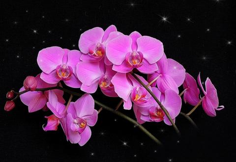 Эти прекрасные орхидеи....