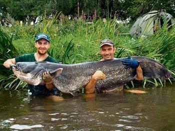 №769. Гигантские сомы наводят страх на рыбаков Германии.