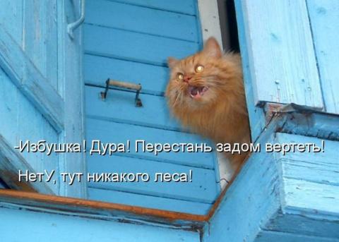 Любить кошку можно только на…