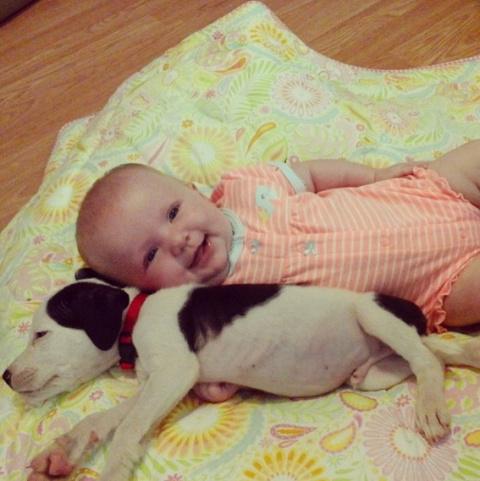 Маленькая девочка и ее питбуль – лучшие друзья с самого рождения