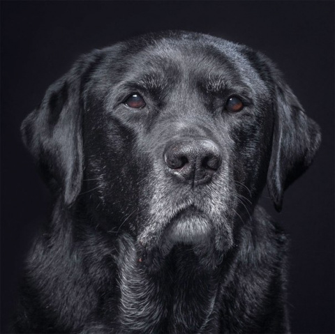 Жительница Днепра требовала от полицейских застрелить собаку!