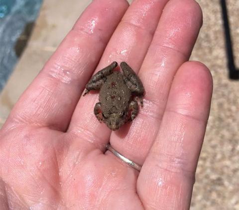 FrogLog: спасем животных от …