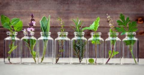 Эти травы вы можете вырастит…