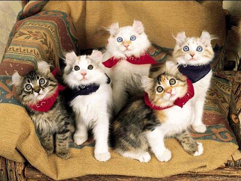 КОШКИН ДОМ. Породы домашних кошек