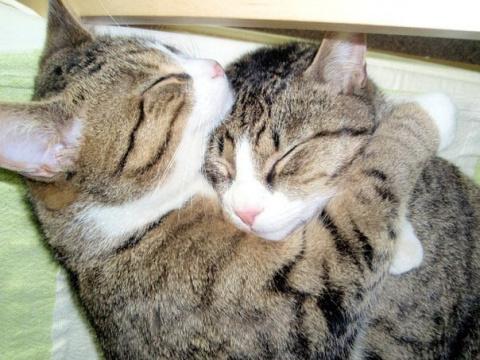 Кошки наши любимые, забавные…