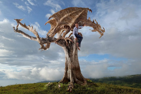 Драконы из коряг