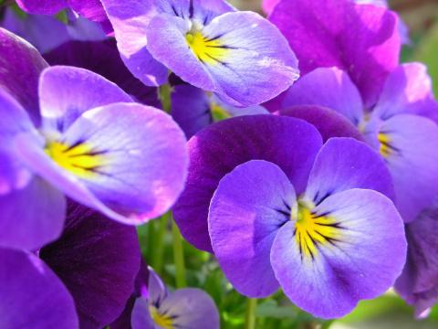 Домашние растения, приносящи…