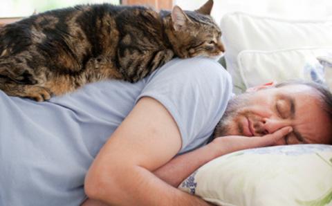 Как осчастливить кота